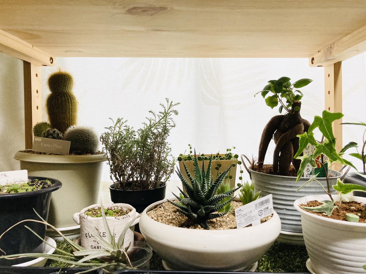 室内ガーデン