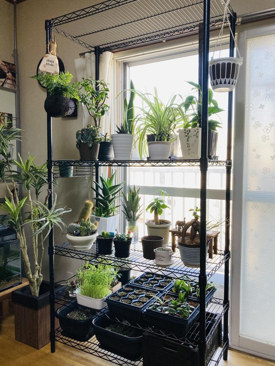 植物用の特大ラック