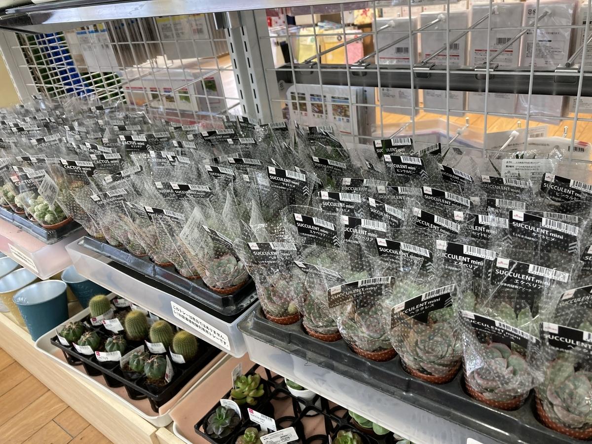 ダイソーの多肉植物大量入荷