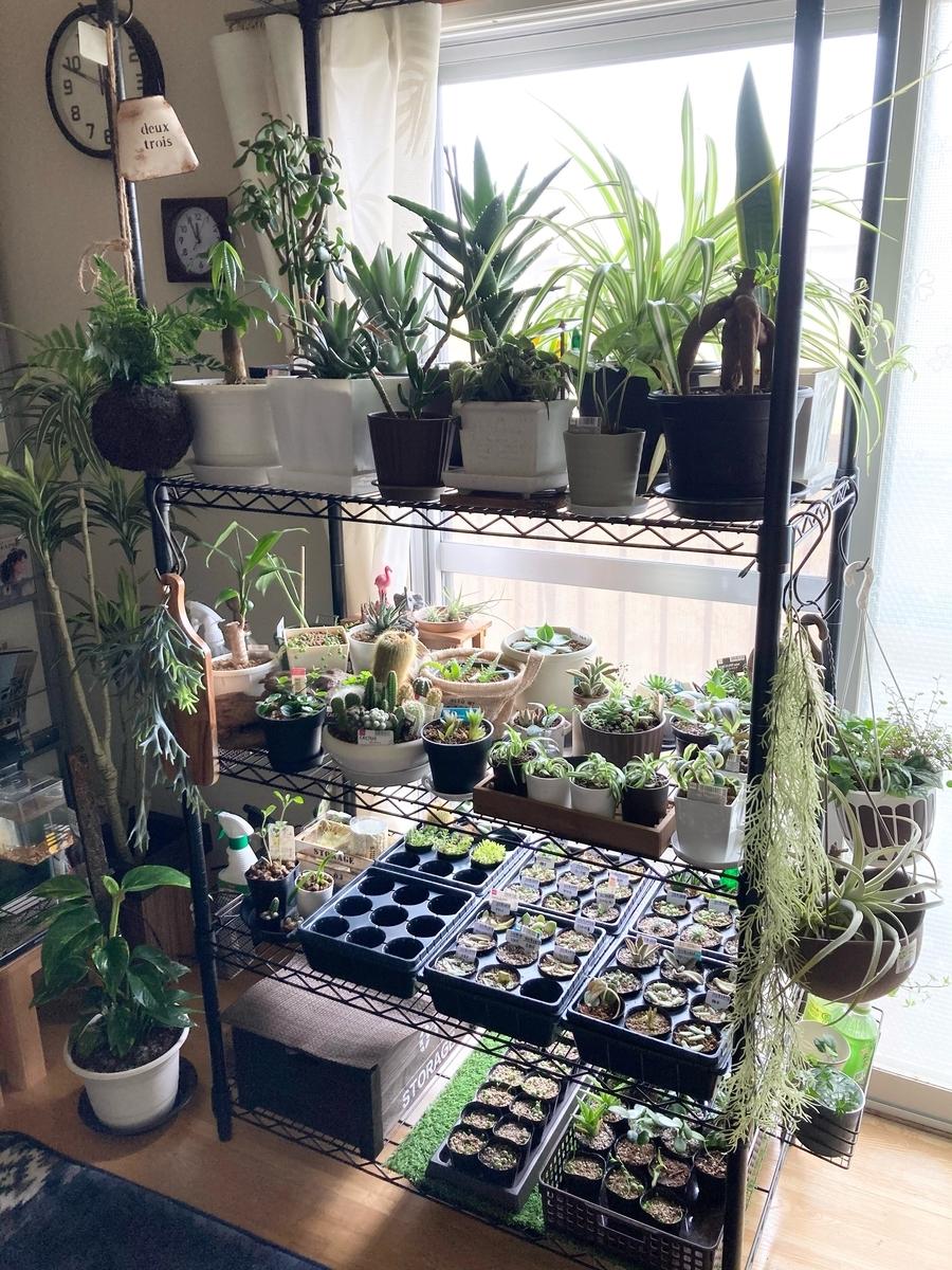 室内植物ラック