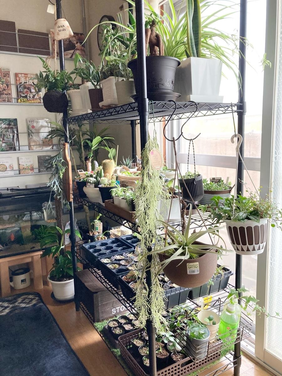 室内植物コーナー