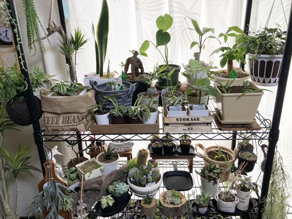 植物ラックコーナー