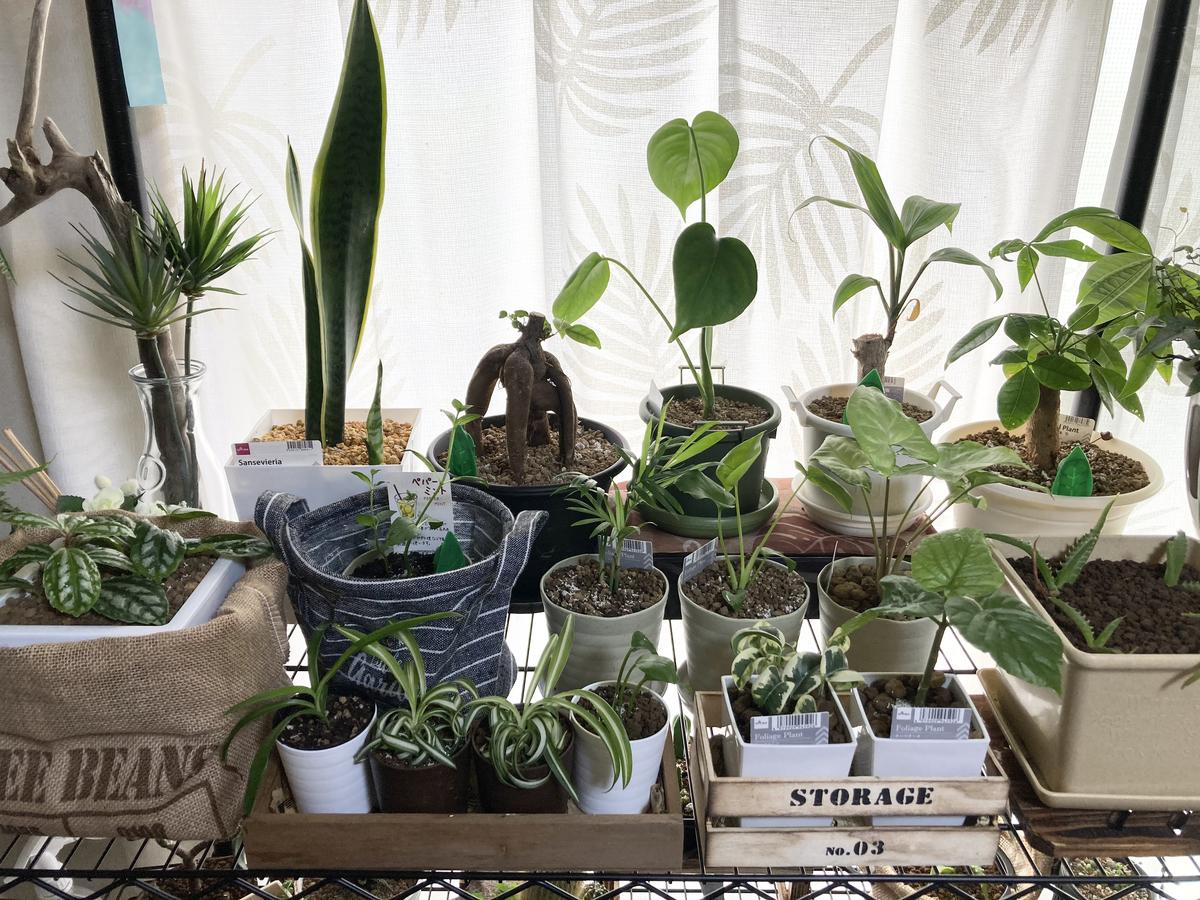 室内の観葉植物
