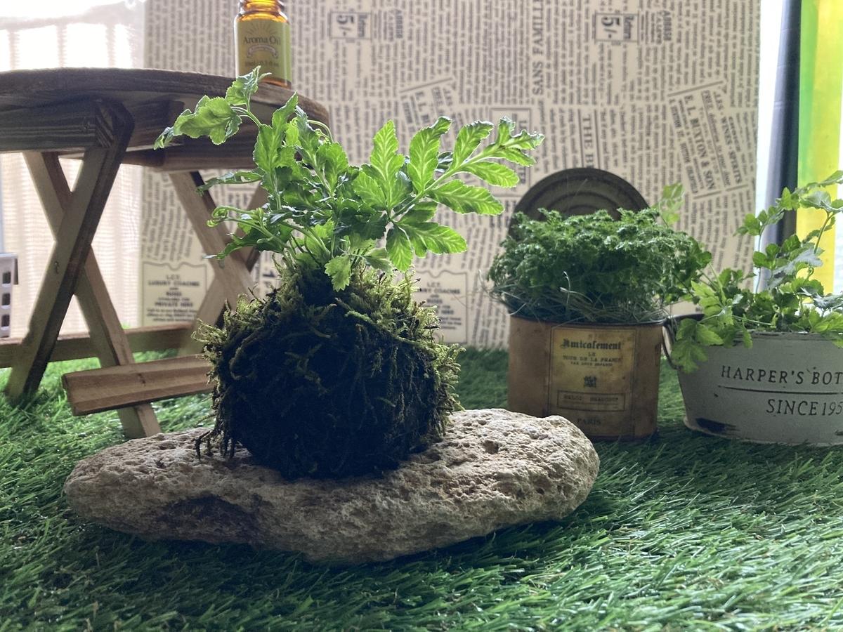 手作り、プテリスの苔玉
