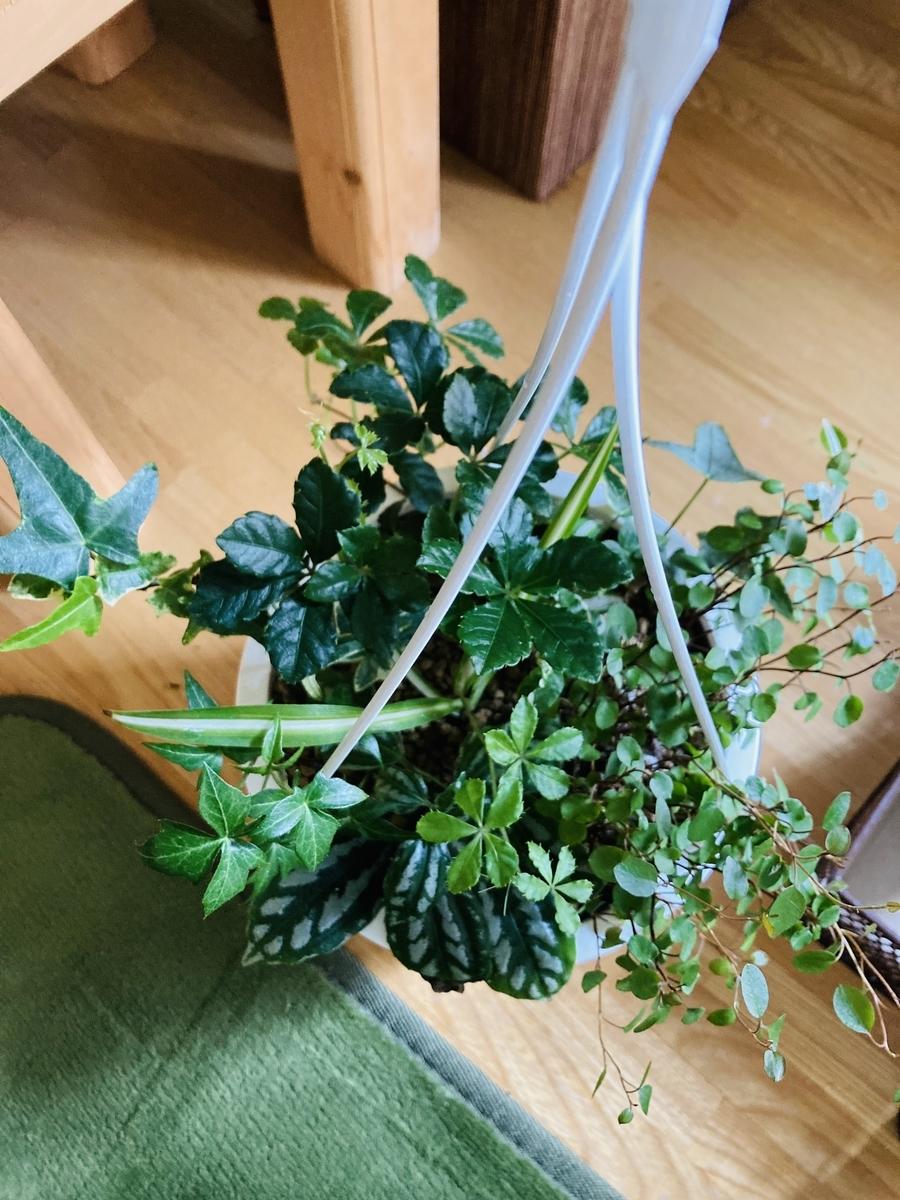 観葉植物の寄せ植え鉢