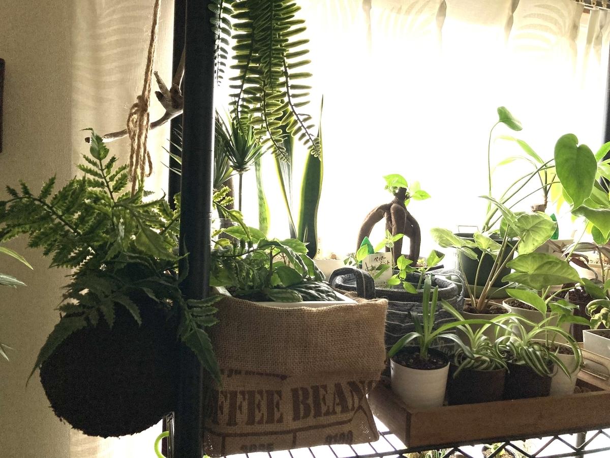 フェイクグリーンと本物の植物