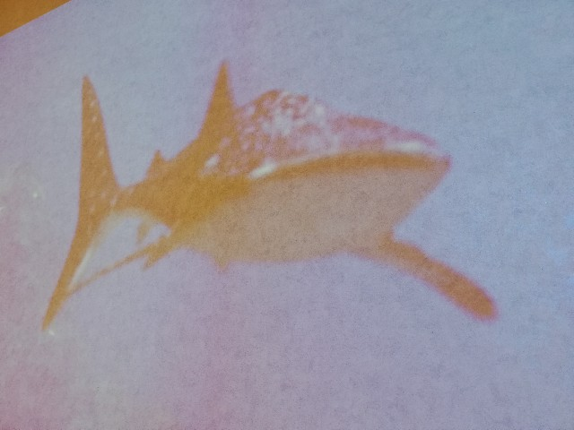 f:id:wistaria_with_river_piyo:20200218150946j:image