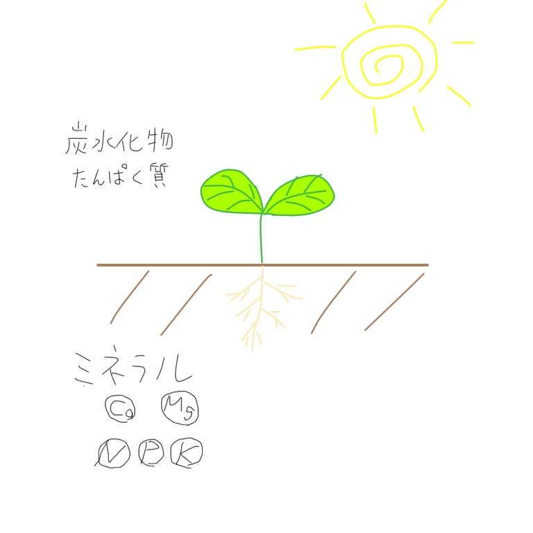 f:id:wisteria6:20180916002750j:plain