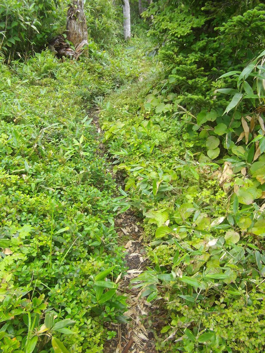 f:id:wistorian:20110101031251j:plain