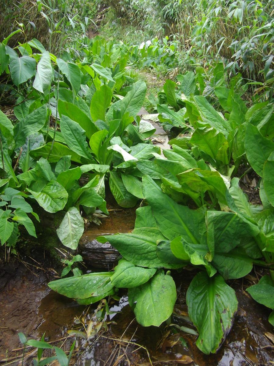 f:id:wistorian:20110101042445j:plain