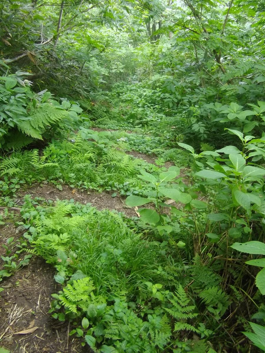 f:id:wistorian:20110102083724j:plain