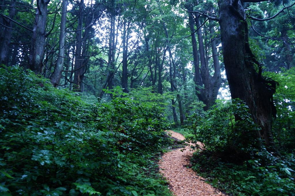 山形県 幻想の森