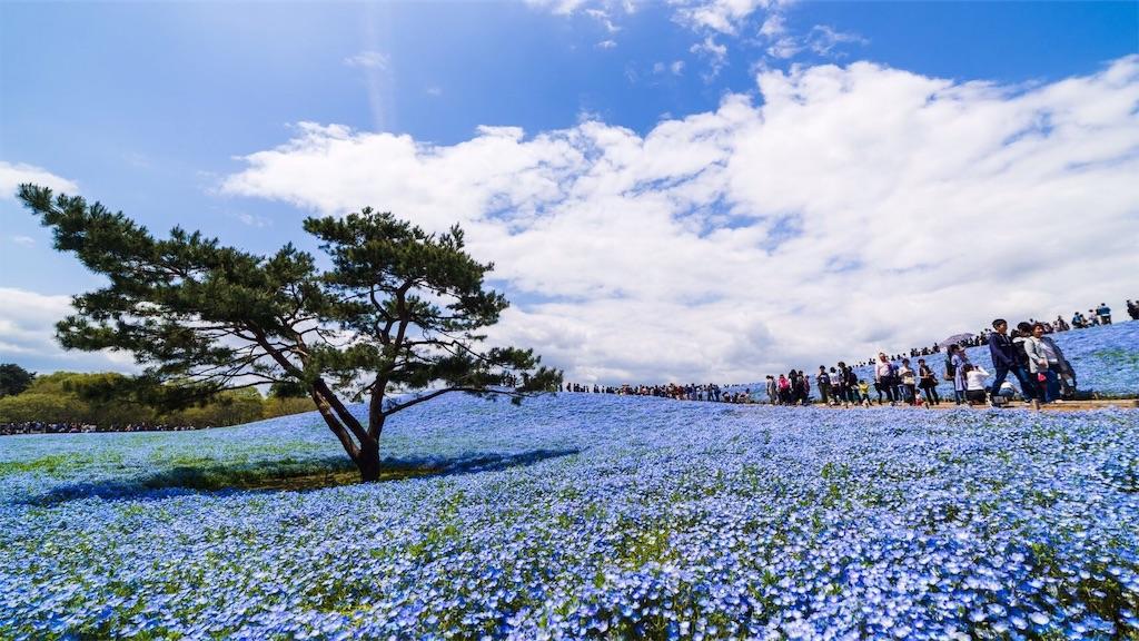 茨城県 ひたち海浜公園