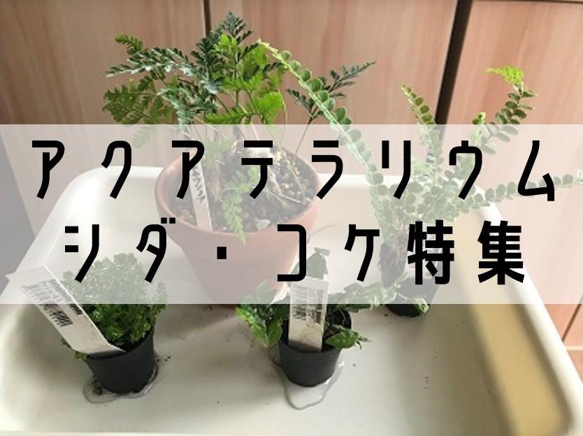 シダ・コケ特集