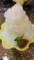 8/13 かき氷(梅みぞれ)