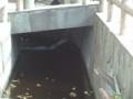 呑川・洗足流れ
