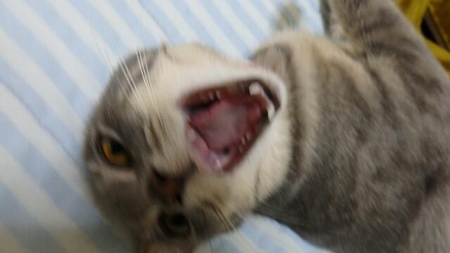 怒ってるネコの写真