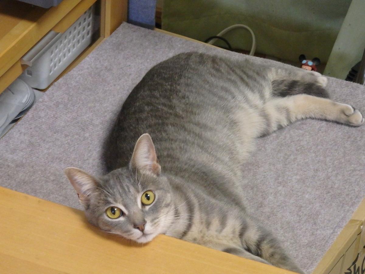 エサを待っているネコの写真