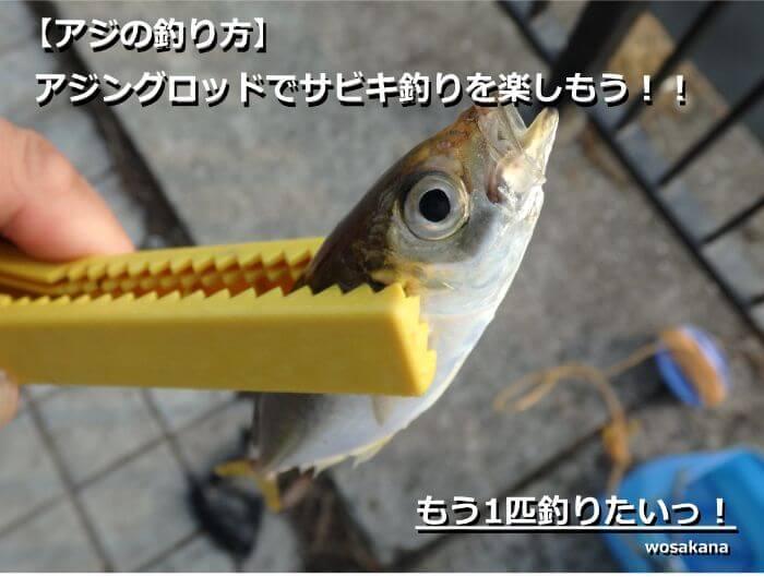 アジングロッドでサビキ釣りをして釣れたアジの写真