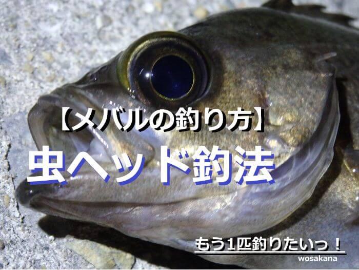 虫ヘッド釣法で釣れたメバルの写真
