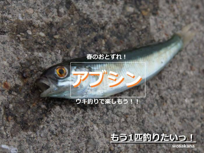 ウキ釣りで釣れたアブシンの写真