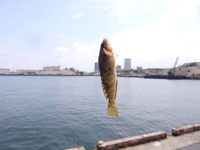 アブシンが釣れる春の晴れた日の写真