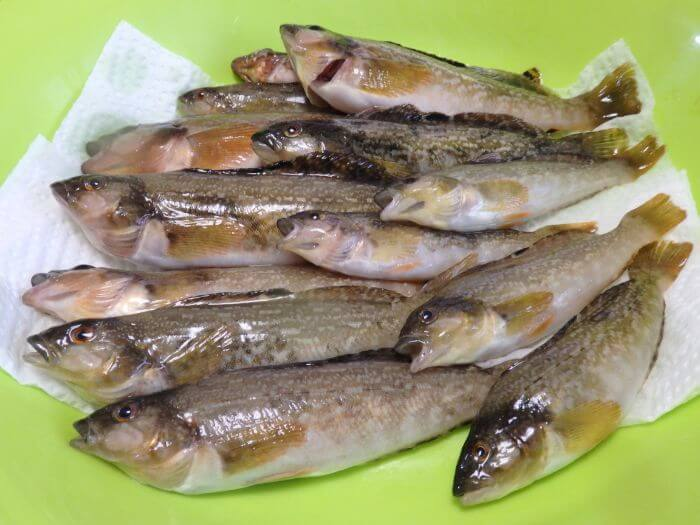 堤防の探り釣りで釣れたアブシンの写真