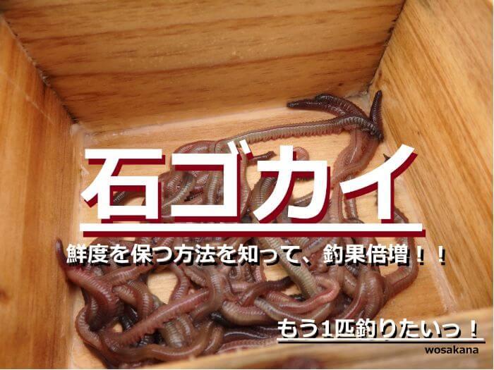 釣りのエサに使う石ゴカイの写真