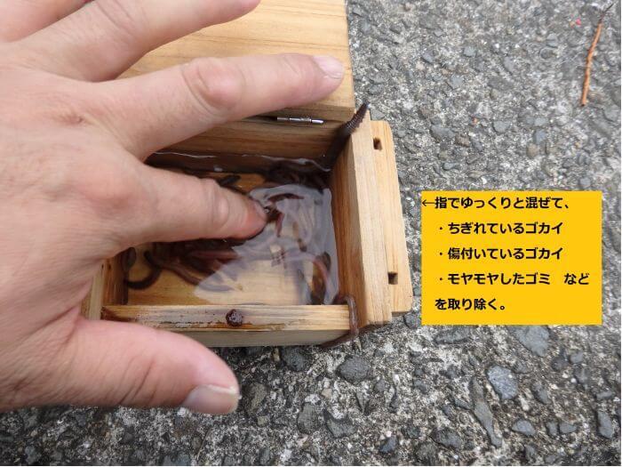 木製のエサ箱に石ゴカイを入れて海水で洗っている写真