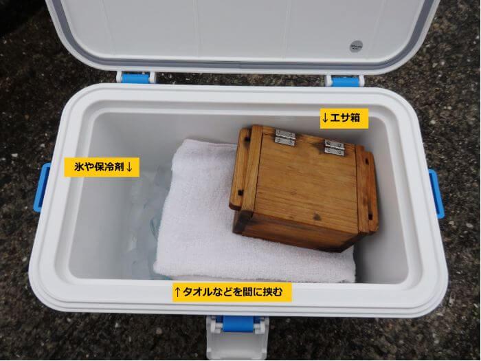 木箱に入れた石ゴカイをクーラーボックスで保管している写真