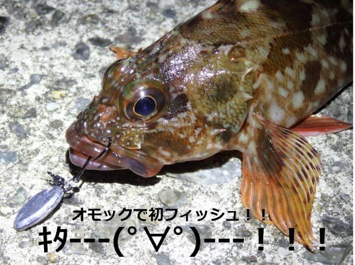自作したオモックで釣れたカサゴの写真
