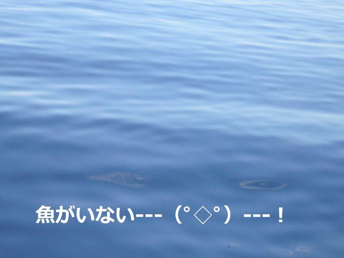アミエビを撒いても魚が寄ってこない海の写真