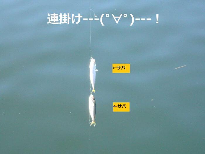 サビキ釣りで連掛け(2匹以上釣れる)した写真