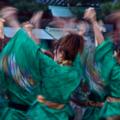 京都新聞写真コンテスト 華咲流舞