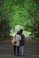 京都新聞写真コンテスト 若葉のころ