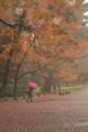 京都新聞写真コンテスト Autumn Leaves