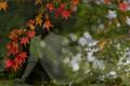 京都新聞写真コンテスト 秋色に染まり