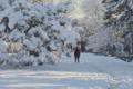 京都新聞写真コンテスト 京都御苑に降る雪も