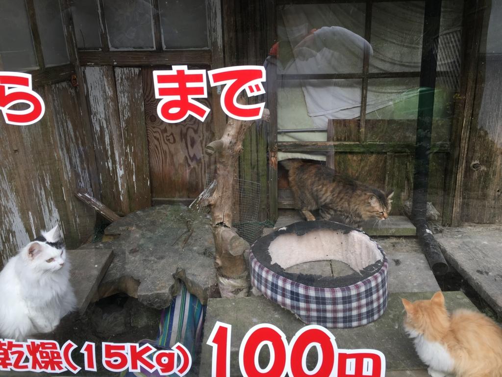 f:id:wpeisuke:20170413234308j:plain