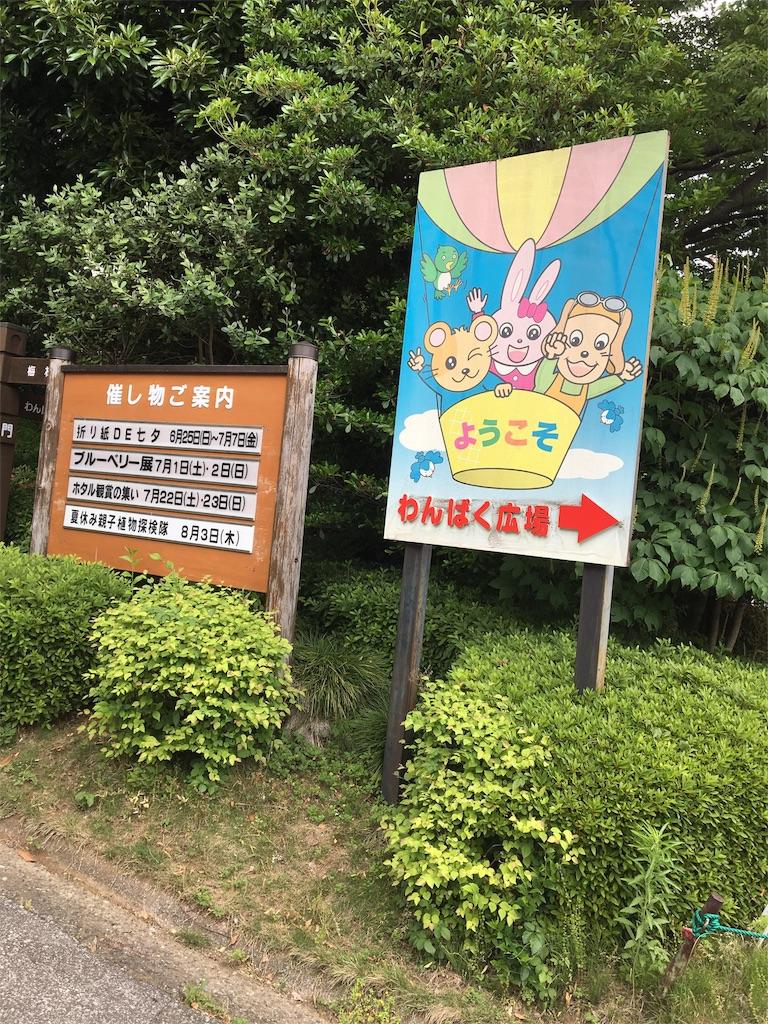 f:id:wpeisuke:20170610232238j:image