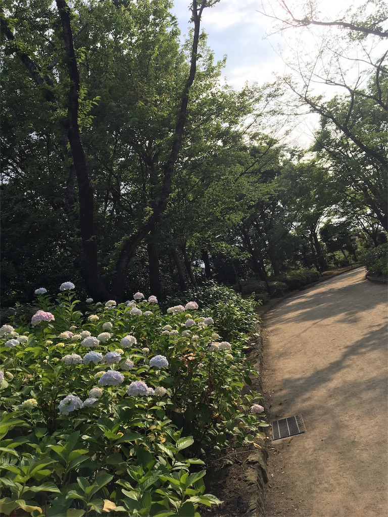 f:id:wpeisuke:20170628081511j:image