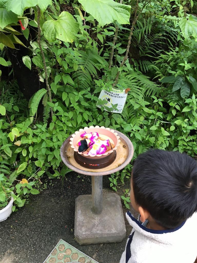 f:id:wpeisuke:20171227001913j:plain