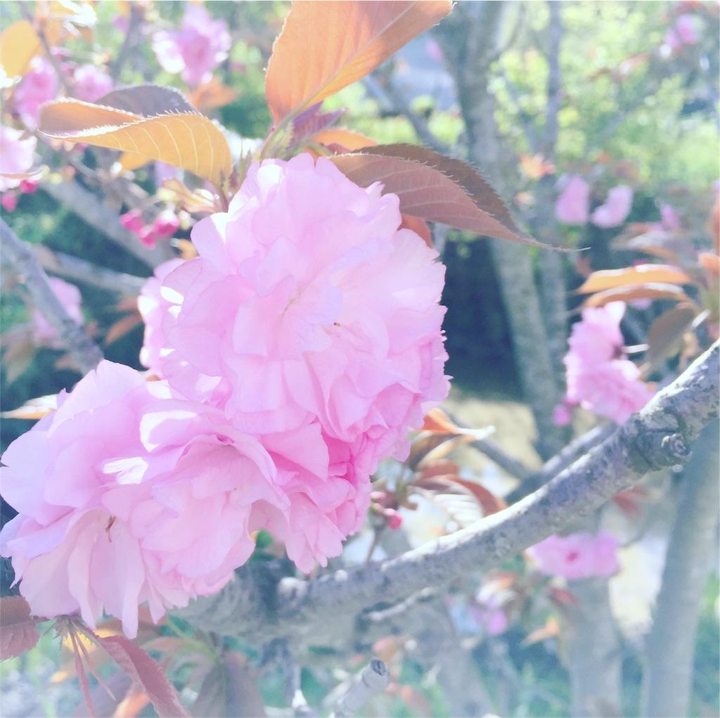 f:id:writertakuma:20170419184441j:image