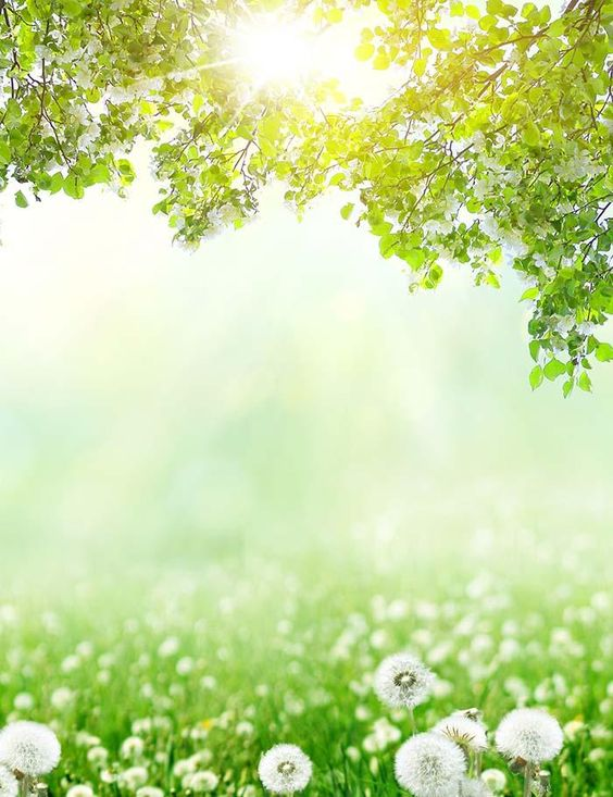 https://www.shopbackdrop.com/products/dandelion-bokeh-sunshine-for-spring-photography-backdrop-j-0552?utm_source=pinterest&utm_medium=social&variant=9163592466481