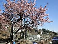 f:id:xiaogang:20100209172959j:image