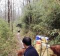 陝西漢中、村民がパンダに出会う