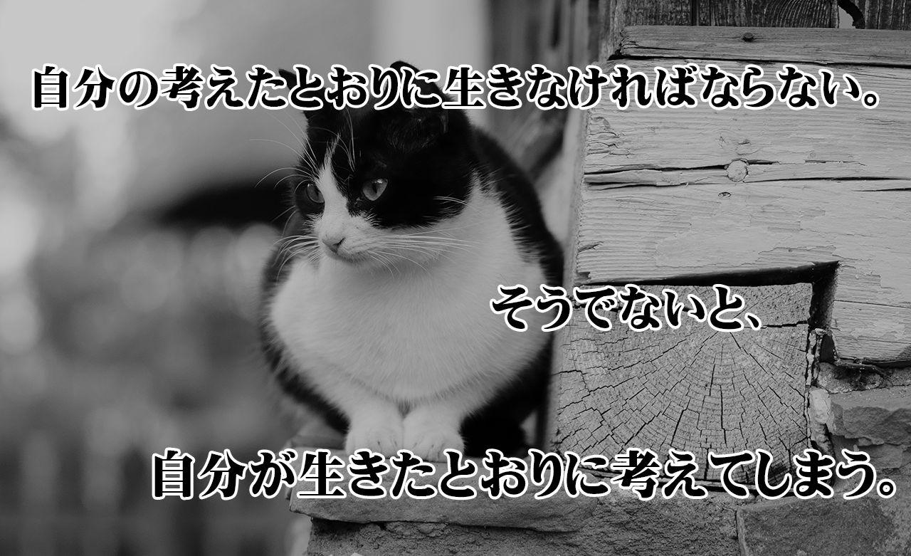 f:id:xinn42:20151015070758j:plain