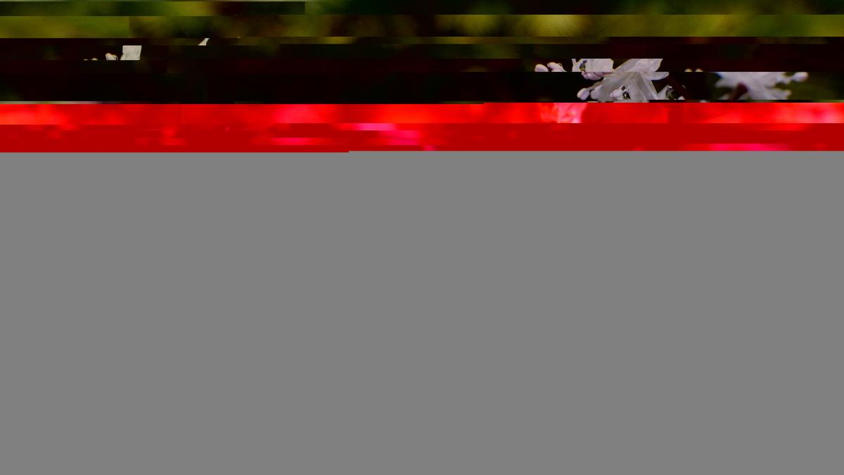 f:id:xjino:20200223210134j:plain