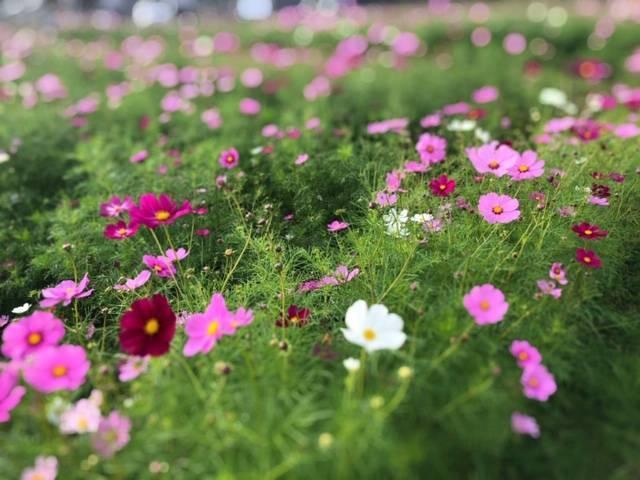 中宮寺史跡公園