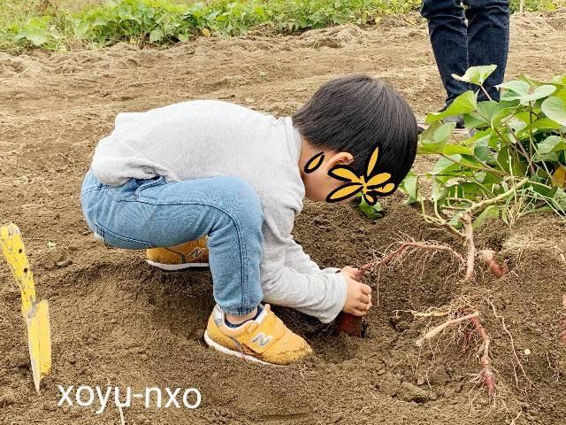 f:id:xoyu-nxo:20201104134808j:image